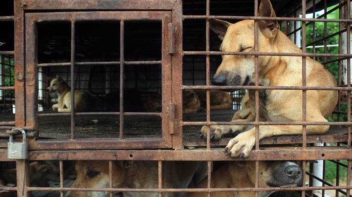 Taiwan Becomes First Asian Country To Ban Dog And Cat Meat