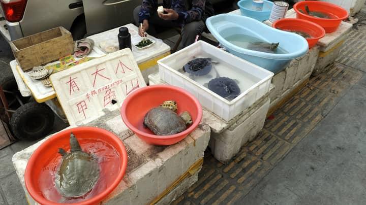 Coronavirus Epicentre Hubei Province Bans The Eating Of Farm-Raised Wild Animals