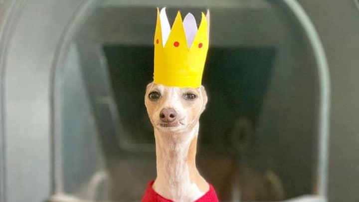 This Greyhound Has Become Everyone's Favourite Social Media Influencer
