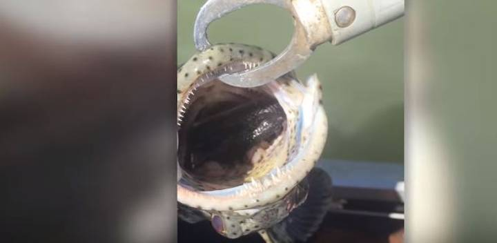 Guy Catches Fish, Finds Snake Inside Its Mouth
