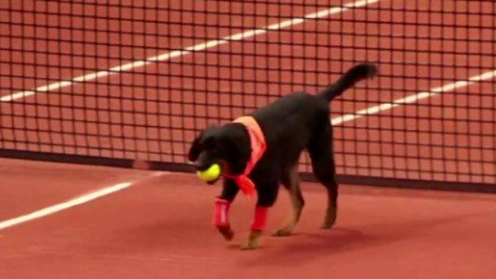 Brazilian Open Use Shelter Dogs As Ballboys And It's The Best Thing Ever