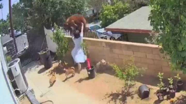 Footage Shows Moment Woman 'Yeeted' Bear Off Wall To Save Her Dogs