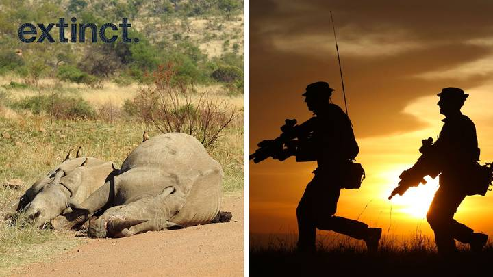 British Troops Will Join The Fight Against Poachers In Africa