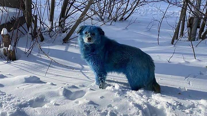 Stray Dogs To Be Checked After Fears They Turned Blue Due To Pollution