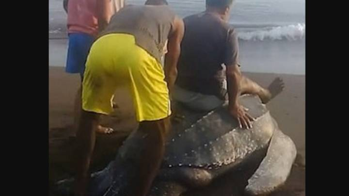 Video Shows People Cruelly Riding On The Back Of A Turtle