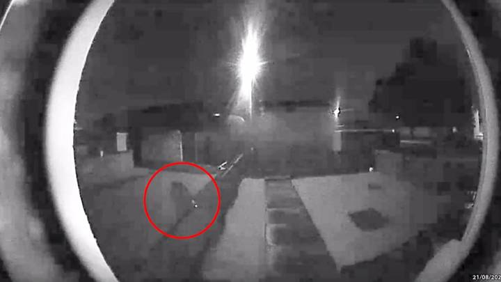 Experts Claim 'Big Cat' Captured On Scottish Doorbell Cam Is A Puma