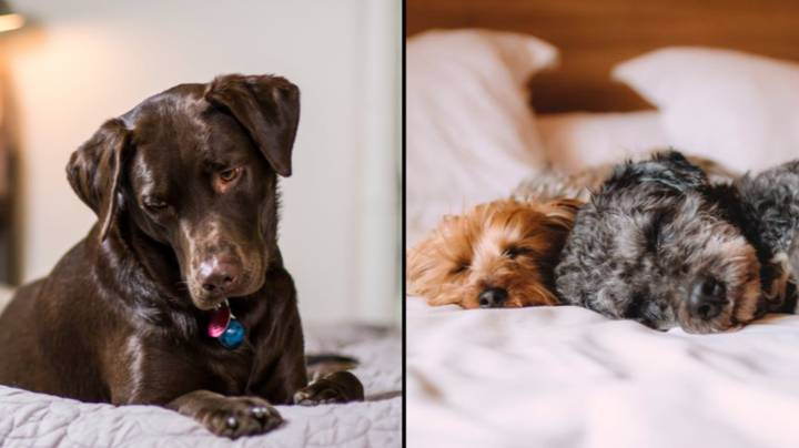 Having Your Dog In Bed Is The Key To A Good Night's Sleep, According To Science
