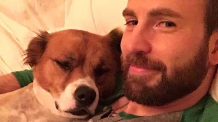 Chris Evans Tries Cutting Dog's Hair In Lockdown And It Goes Badly Wrong