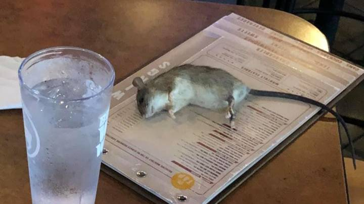 Live Rat Falls From Ceiling In Chicken Wings Restaurant