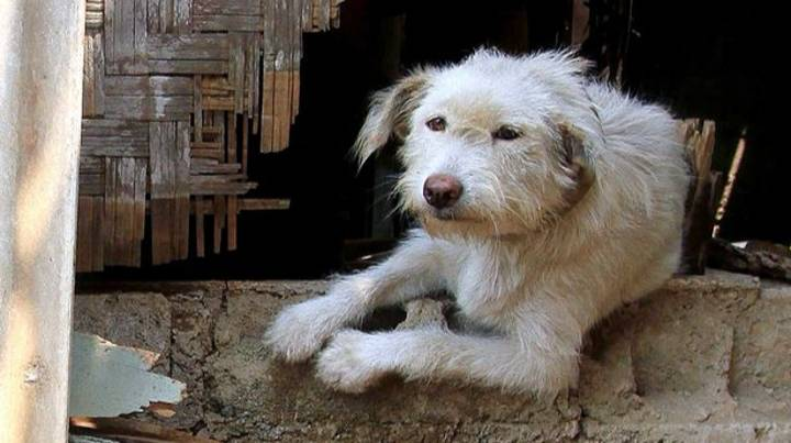 Photographer Exposes Brutal Side To Indonesian Dog Meat Industry