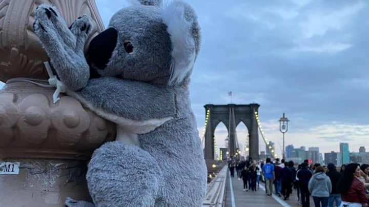 Plush Koalas Placed Around NYC To Encourage People To Donate To Bushfire Crisis