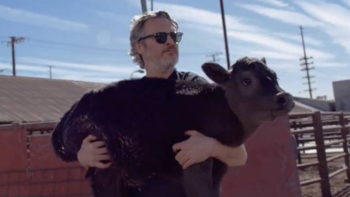 Joaquin Phoenix Rescues Cow And Her Week-Old Calf From Slaughterhouse