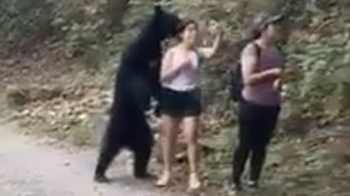 Woman Snaps Selfie During Close Encounter With A Black Bear In Mexico