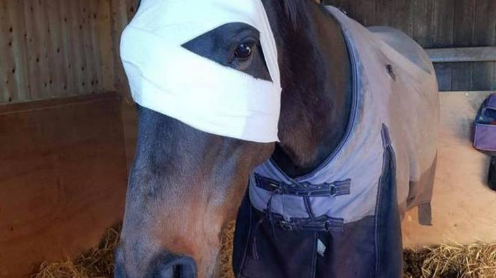 Horse Loses Eye After Being Hit By Firework