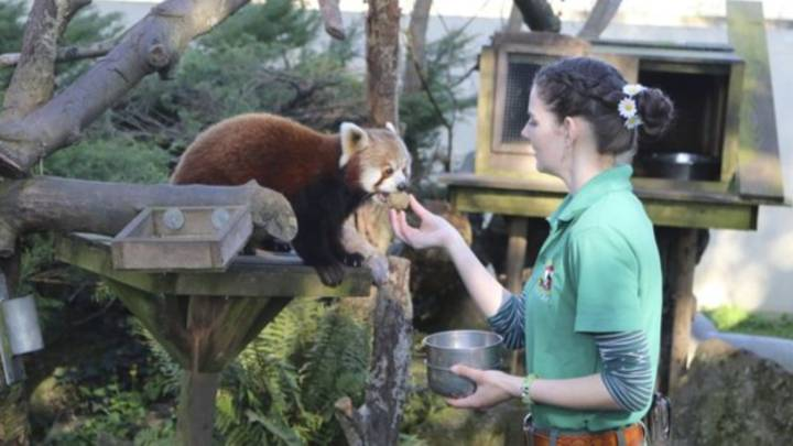 Zoo Keepers Self-Isolating With Animals So They Can Feed Them Amid Coronavirus