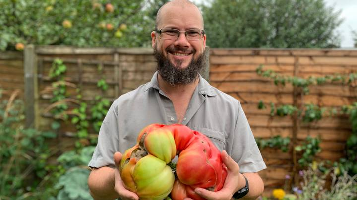 Dad Grows UK's Biggest Tomato Using A Pair Of Tights