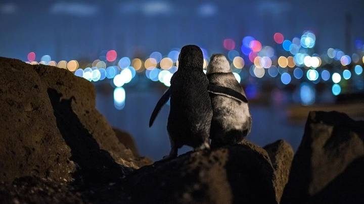 Viral Picture Of Widowed Penguins Wins Photography Prize