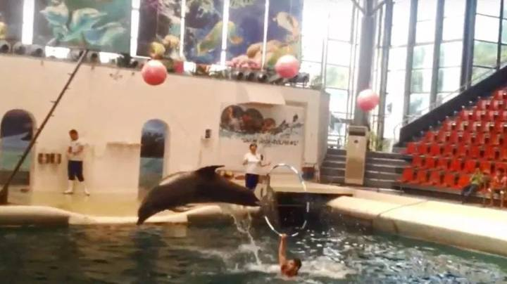 Baby Dolphin Dies 'Mid Performance' At Water Park In Bulgaria