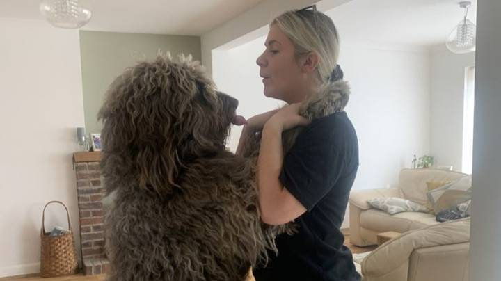 Owner Of 'Chewbacca Dog' Had No Idea Her Pet Would Become Human Sized