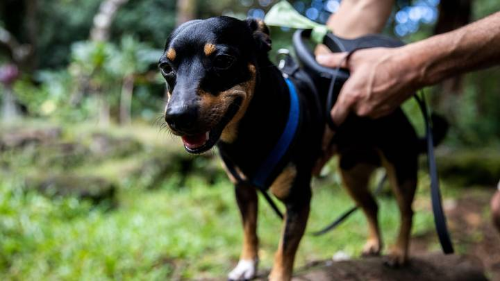 Dog Owners Who Use A Harness With No ID Tag Could Be Hit With Hefty Fine