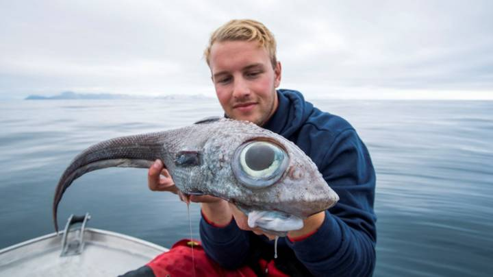 Norwegian Angler Catches Odd Looking Ratfish With Huge Bulbous Eyes