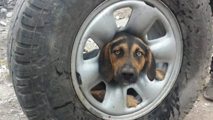 Footage Shows Poor Pooch Being Rescued After Getting Its Head Stuck In A Tyre