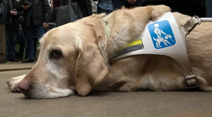 Caffe Nero Refuses To Give Water To A Blind Man's Guide Dog