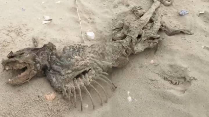 Bizarre Eyeless, Fish-like Creature Washes Up On US Shore