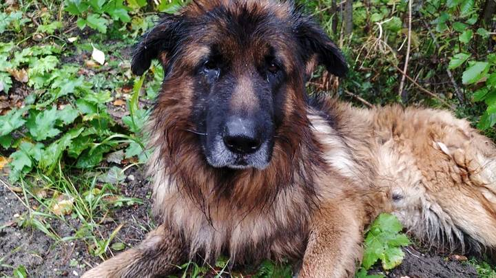Dog Digs Self Out Of Grave After Burial Following 'Lethal Injection'