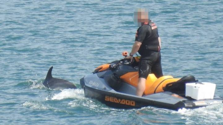 Man On Jet Ski 'Harrassed Pod Of Dolphins' Before Riding Off