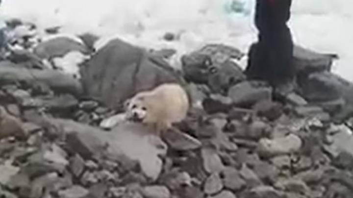 Baby Seal Dies From Stress After People Crowd Around It On Beach