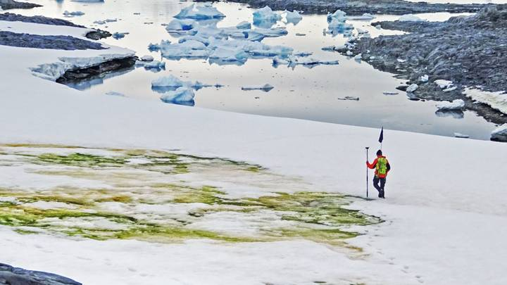 Climate Change Will Turn Parts Of Antarctica Green, Scientists Say
