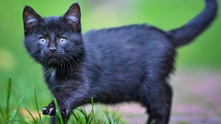 All Cats Will Have To Be Microchipped Under New Government Plans