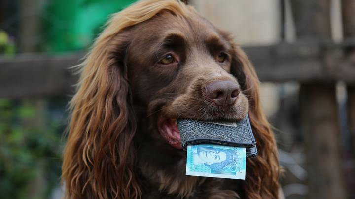 Dog Receives Weekly £5 Pocket Money Allowance From Owner