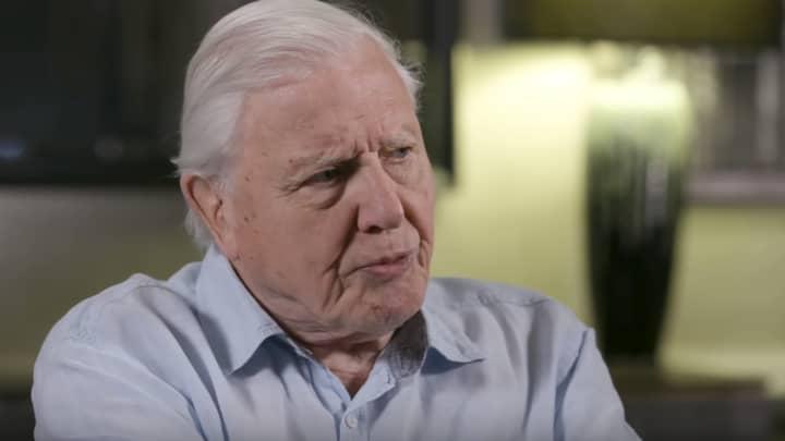 David Attenborough Says He's Not Afraid Of Death