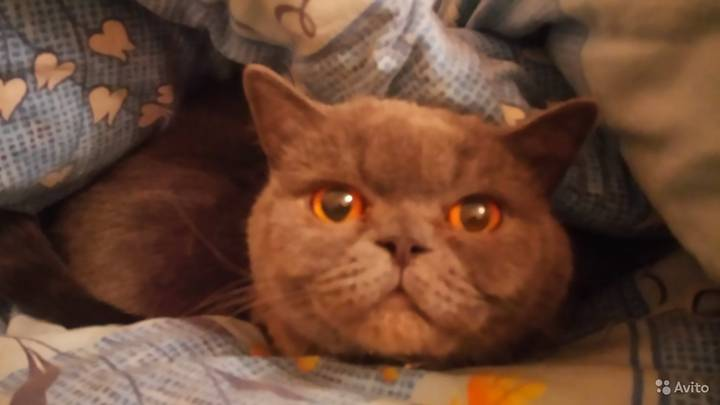 Hangover-Curing Cat On Sale For £185,000