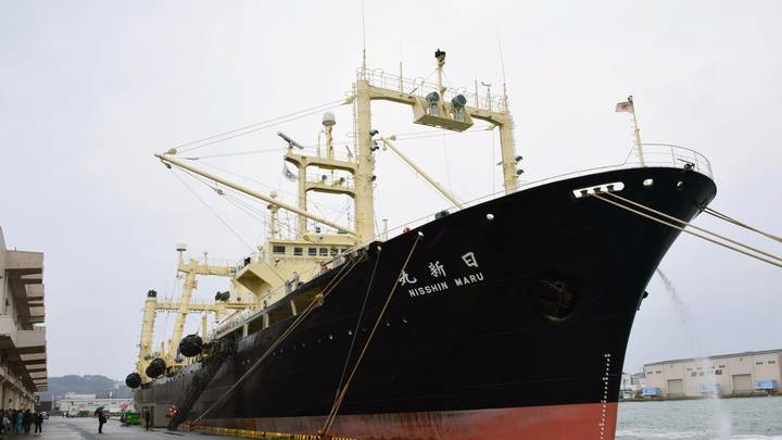 Japan Has Killed More Than 300 Whales 'For Science' In Annual Hunt