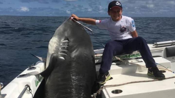 Eight-Year-Old Boy Reels In 314kg Shark Off South Sydney Coast