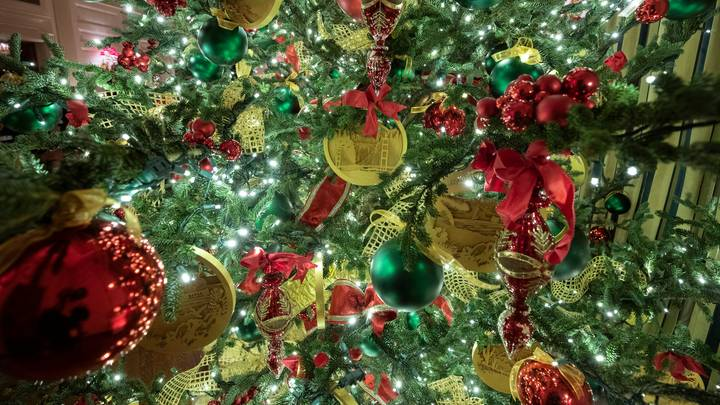 Your Christmas Tree Could Be Harbouring Loads Of Creepy Crawlies