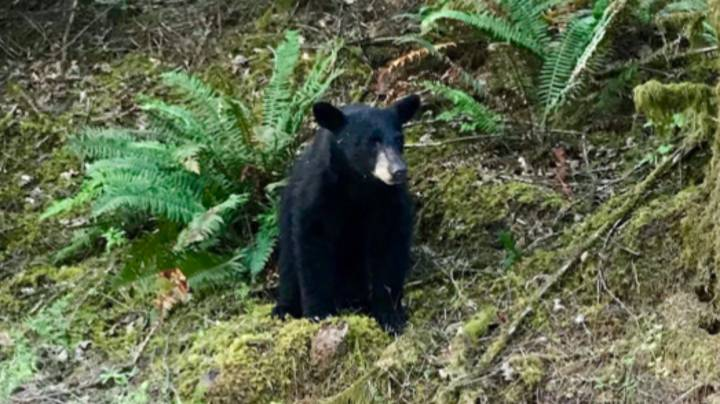 Wildlife Officials Shoot Baby Bear After Tourists Fed It Too Much Food