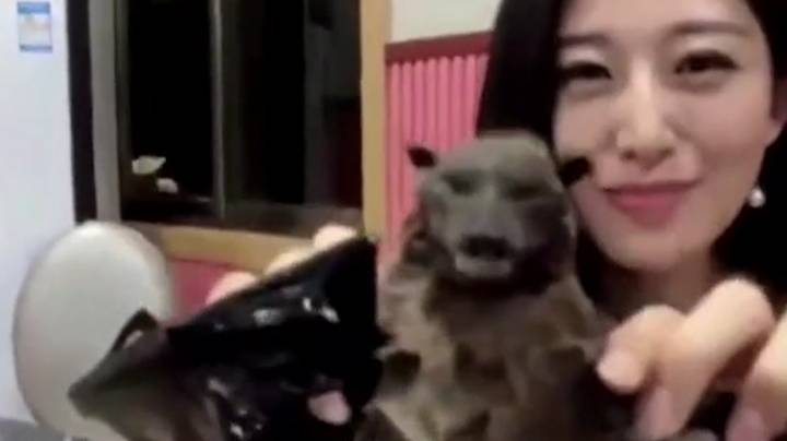 Chinese YouTuber Apologises After Bat-Eating Video Resurfaces