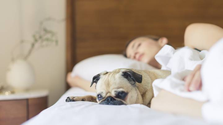 Sleeping With Your Dog In Your Bed Is Actually Really Good For You, Study Finds