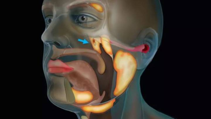 Scientists Have Discovered A New Organ In The Throat By Accident