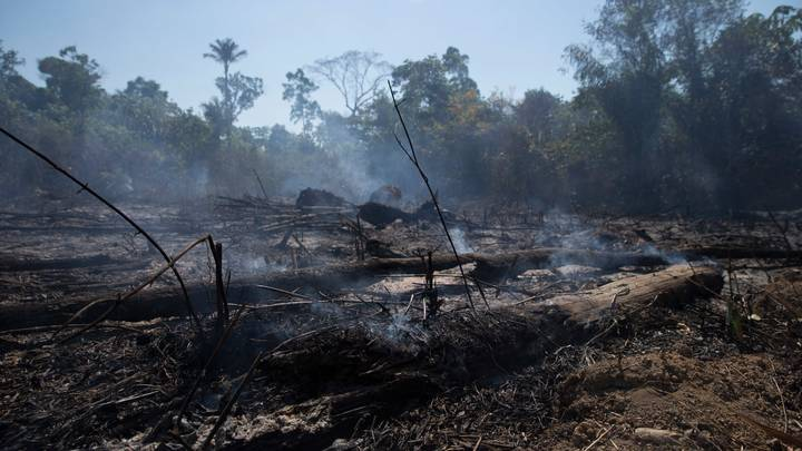 Brazil's Amazon Rainforest Deforestation Hits 12-Year High Amid Climate Concerns