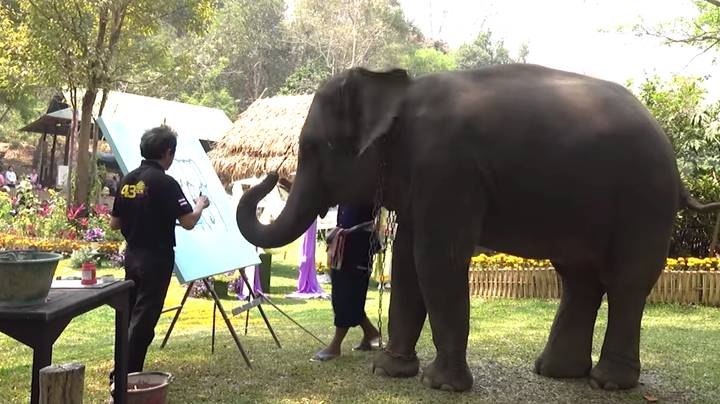 Heartbreaking Video Shows Chained Elephant Forced To Paint Self Portrait In Front Of Tourists