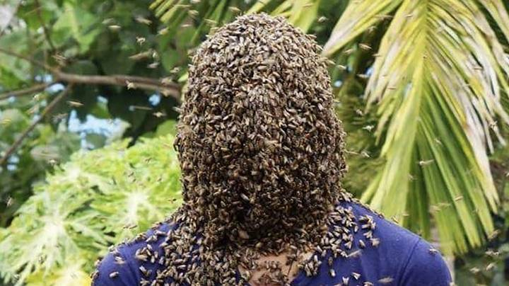 Beekeeper Lets Thousands Of Bees Cover His Entire Head