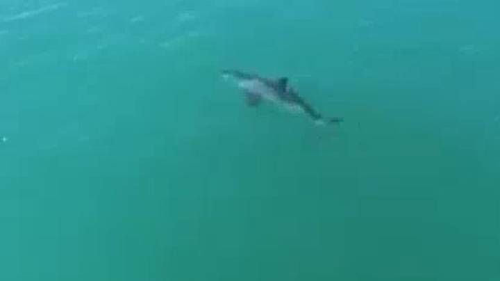 Drone Footage Shows Great White Shark Moving 'At Least 20mph'