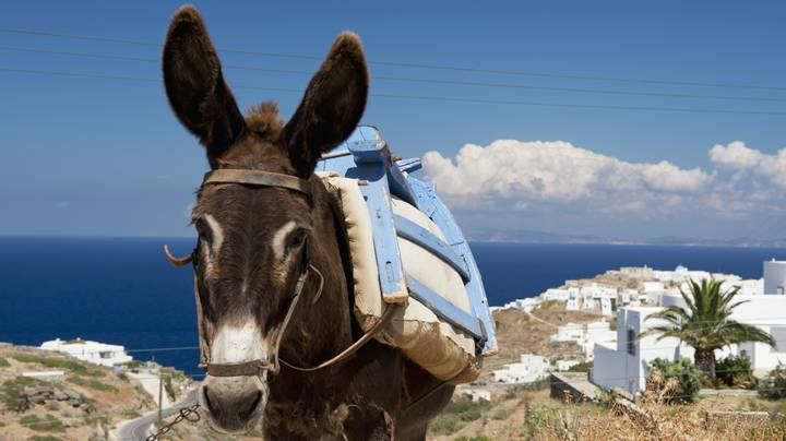 Heavy Tourists Caught Riding Donkeys In Greece Could Be Hit With £25,000 Fine