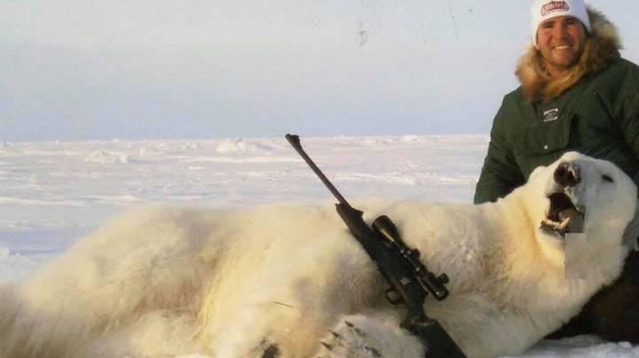 Experts Say There's Been A Rise In Organised Polar Bear Hunts