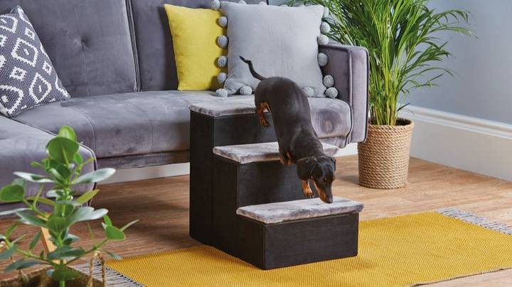 Aldi Is Selling Pet Stairs To Help Your Dog Climb On The Sofa